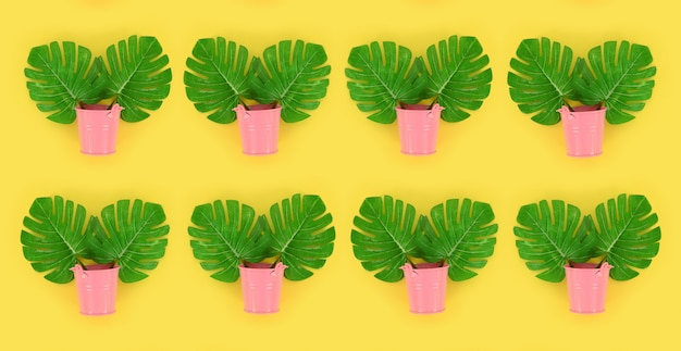 Tropical palm monstera leaves lies in a pastel pails on a colored background