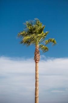 青い空を背景に一人で熱帯のヤシの木
