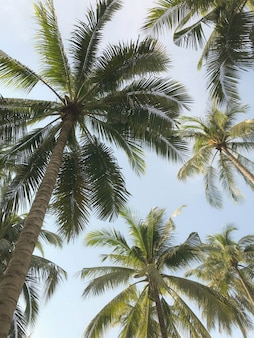 Tropical palm tree in garden