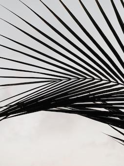 白い壁に熱帯のヤシの木の葉の影のシルエット