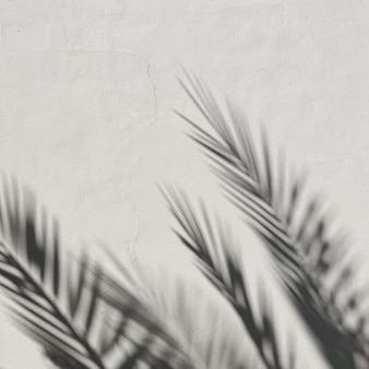 Tropical palm tree leaves and sunlight shadows on neutral white wall