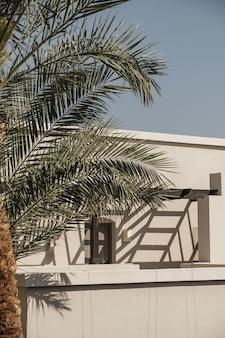 白い家、青い空とリゾートの建物の近くに緑豊かな葉を持つ熱帯のヤシの木