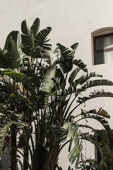 백악관, 리조트 건물 근처 무성한 녹색 잎을 가진 열 대 야자수.
