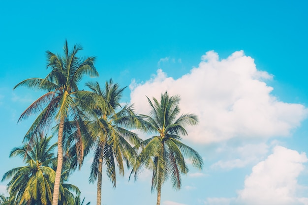 Tropical palm tree with summer blue sky background.
