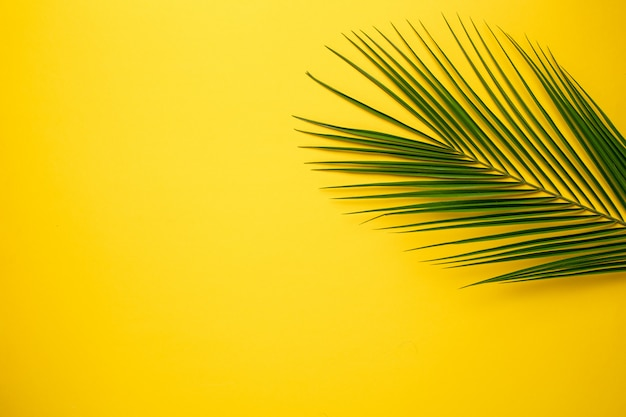 Tropical palm tree on yellow
