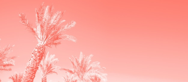 Tropical palm trees over coral color sky. summer and travel concept. holiday background.