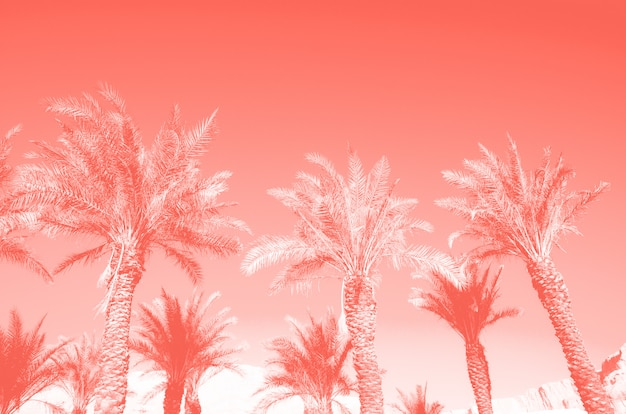 Tropical palm trees over coral color sky. summer and travel concept.