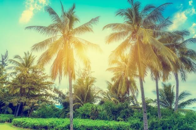 Тропические пальмы на солнце