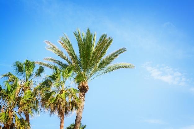푸른 여름 하늘에 열 대 야자수, 복고풍 톤