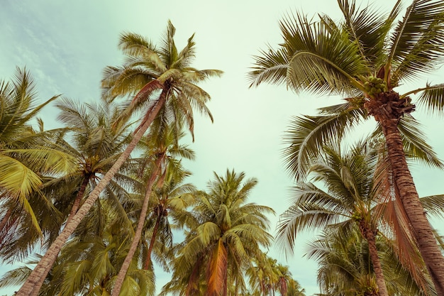 Tropical palm trees with sun light on a bright blue sky