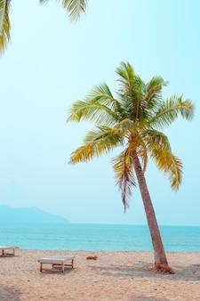 Тропический райский пейзаж. пальма на пляже на песке, пустые шезлонги для отдыха.