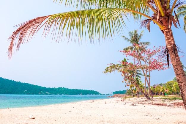 熱帯の楽園の風景。砂浜のビーチに椰子の木と咲く熱帯の木々、タイのチャン島のホリデーシーズン。