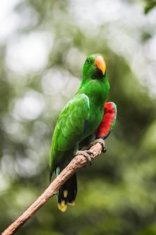 Pappagallo tropicale su un ramo