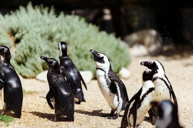 Tropical penguins on the beach near the pool, penguins in the zoo, penguins on a summer day