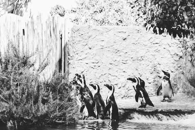수영장 근처 해변의 열대 펭귄, 동물원의 펭귄, 여름날의 펭귄
