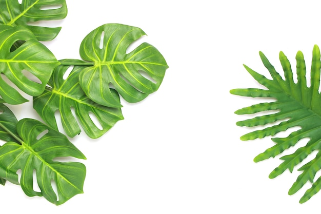 Tropical philodendron and monstera palm leaves tree background