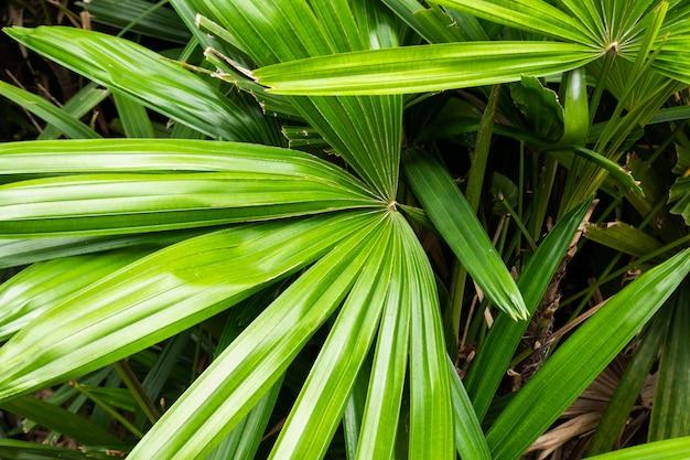 녹색 잎, 자연 질감의 열 대 식물 배경