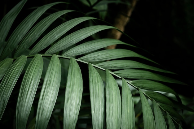 Tropical plant closeup