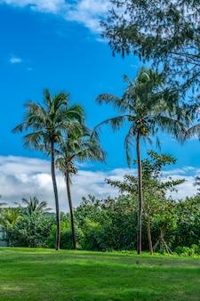 열대 식물 녹색 야자수