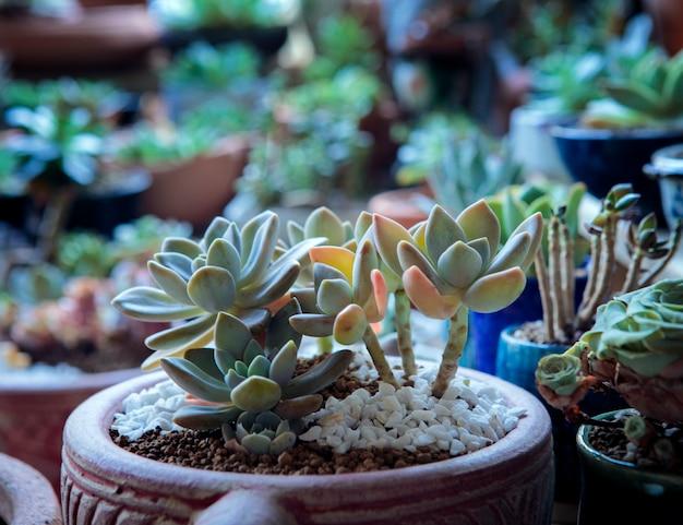 백그라운드에서 다른 식물 냄비에 열 대 식물.