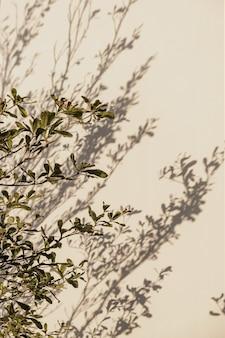 ベージュの壁に熱帯植物。壁に日光の影。
