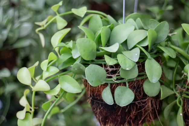 グリーンマーケットでの熱帯植木鉢販売、ストックフォト