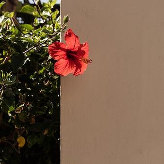 家の建物のベージュの壁に赤い花と熱帯植物