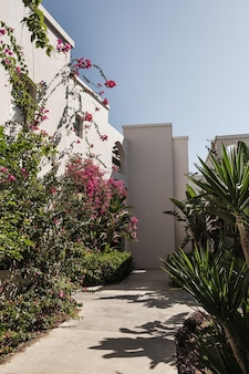 家の建物のベージュの壁に赤い花を持つ熱帯植物。壁の日光の影