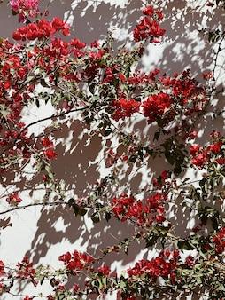 ベージュの壁に赤い花を持つ熱帯植物。壁の日光の影