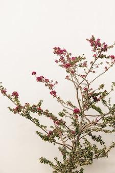 ベージュの壁に赤い花を持つ熱帯植物