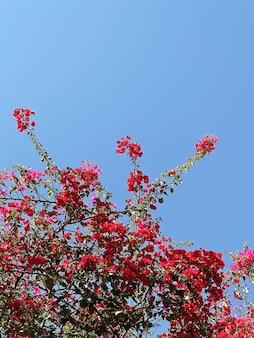 青い空に赤い花を持つ熱帯植物