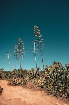 푸른 하늘에 대 한 열대 식물과 나무