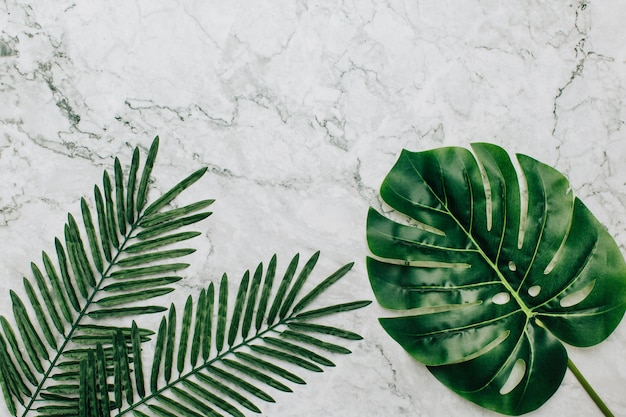 Tropical plants on a marble background