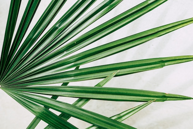 Tropical plants on white
