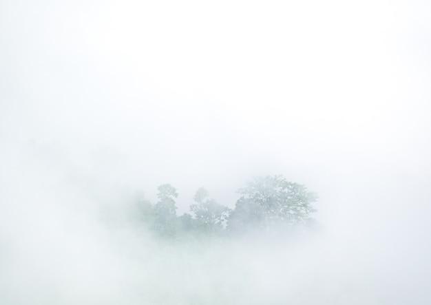 안개 낀 수증기 아침 안개로 덮여 열대 우림 숲