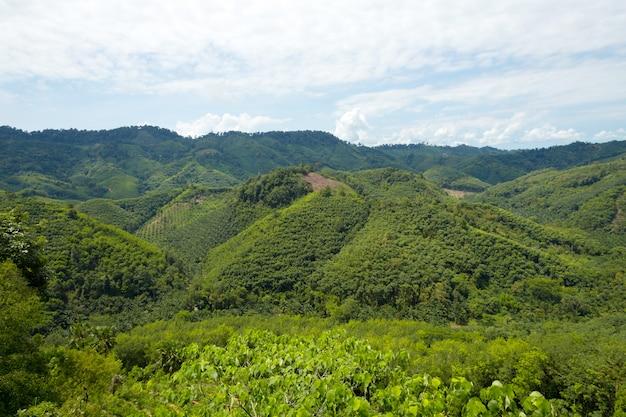 Tropical rain forest hill landscape