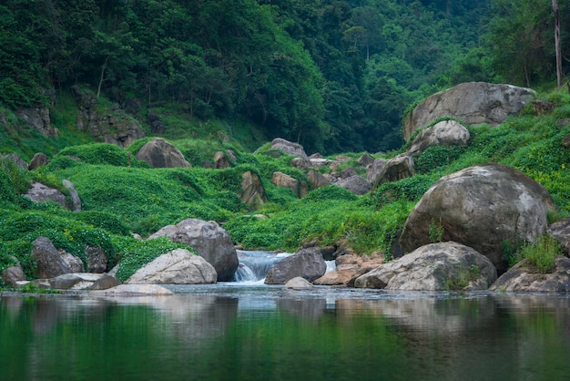The tropical rain forest landscape view, thailand