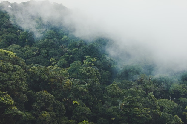 Тропический тропический лес с горами и туманом утром.