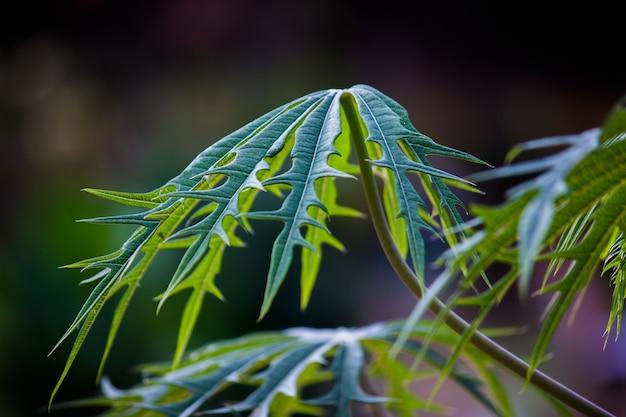 熱帯雨林の観葉植物の茂みシダ緑の葉フィロデンドロンと熱帯植物の葉