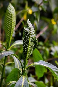 熱帯雨林の観葉植物の茂みシダ緑の葉フィロデンドロンと熱帯植物
