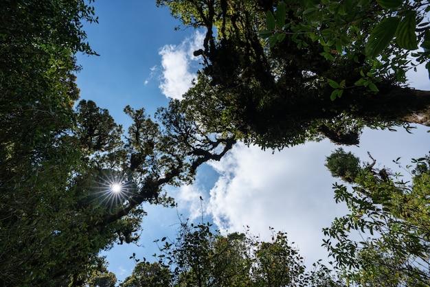 Tropical rainforest, green jungle landscape