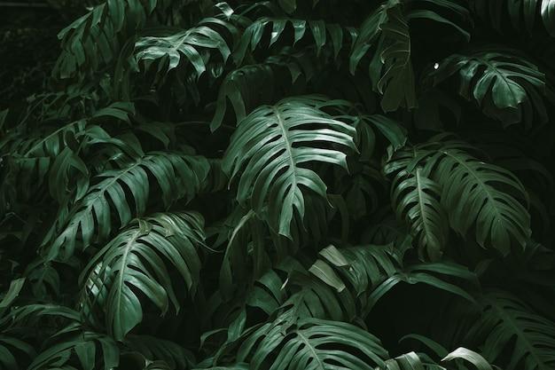 Тропический лес зеленые листья монстера филодендрон природа растение изображение для украшения дома фон обои
