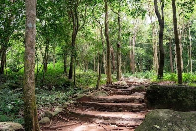 태국 프라추압 키리 칸에 있는 화이양 국립공원의 열대우림
