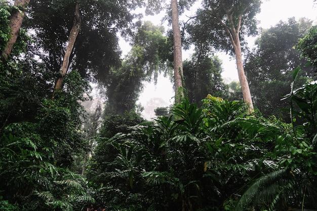 Tropical rainforest with fog hala-bala wildlife sanctuary
