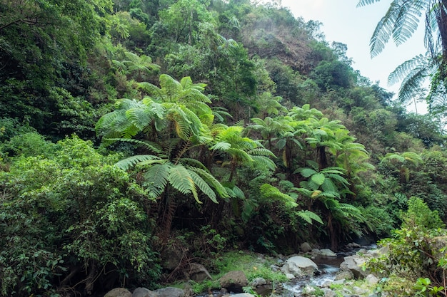 Tropical rainforest with various tree and stream