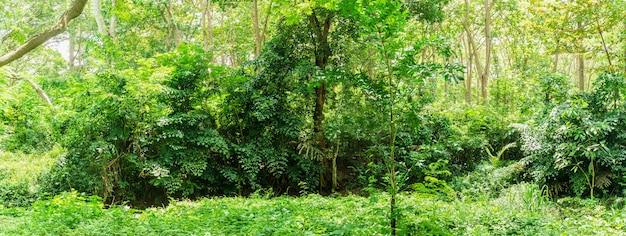Tropical rainforest