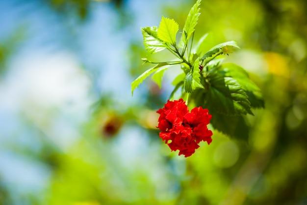 熱帯の赤い花のクローズアップ