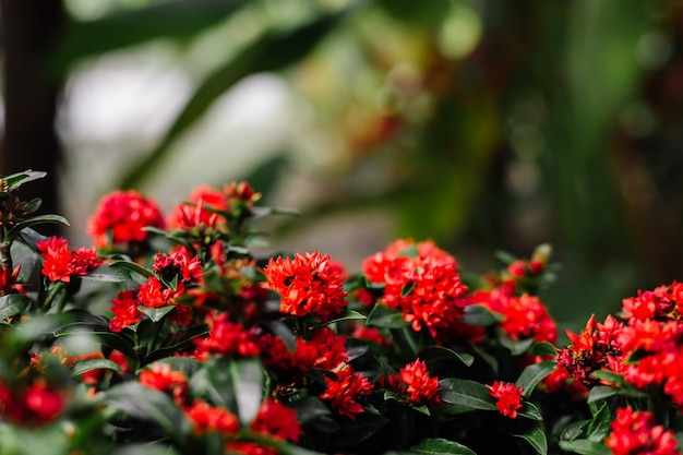 Tropical red flowers