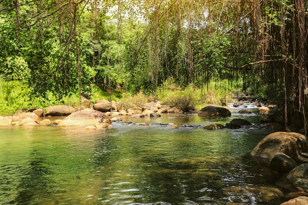 Tropical river with waterfall. green jungle forest
