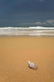 Тропический песчаный пляж